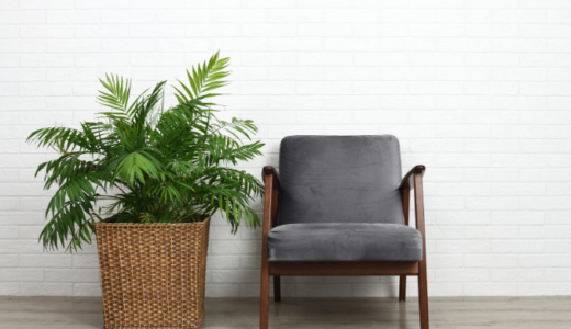 観葉植物で和やかで落ち着きのある暮らしを。人気の種類や世話の仕方などを解説